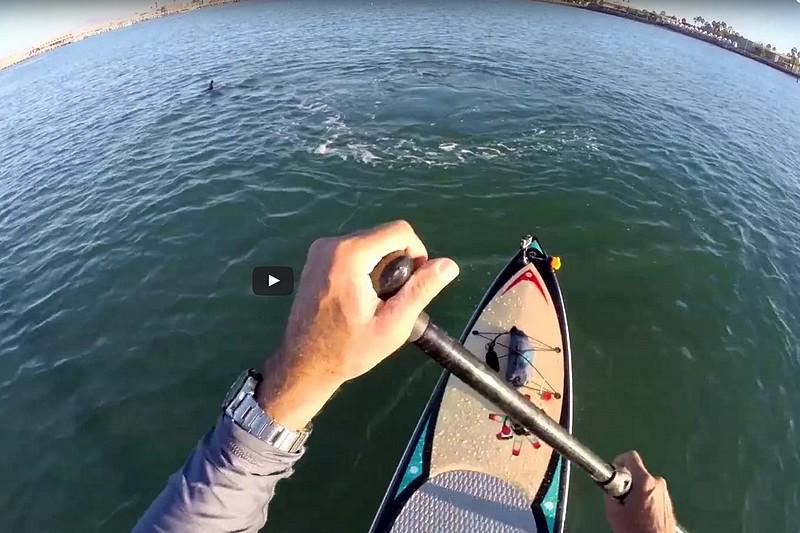 Vidéo : Une balade avec des dauphins