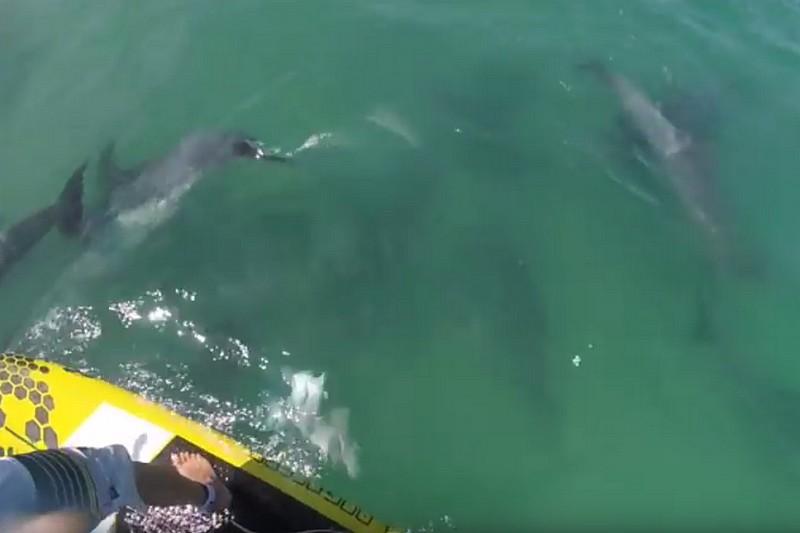 Vidéo : Ramer avec des dauphins