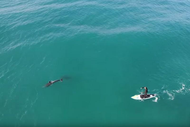 Vidéo : Un SUPer et des dauphins à San Diego