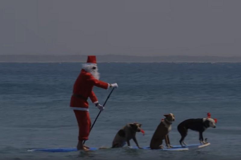 Vidéo : Le Père Noël et ses rênes
