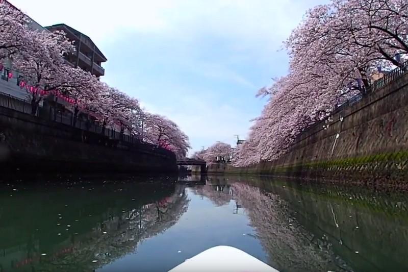 Vidéo : Sakura SUP 2016