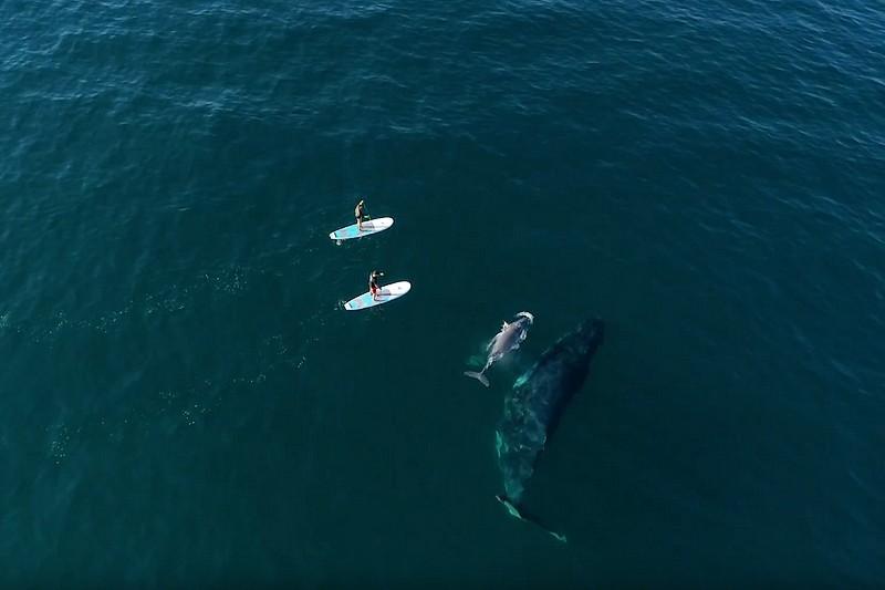 Du stand up paddle et des baleines
