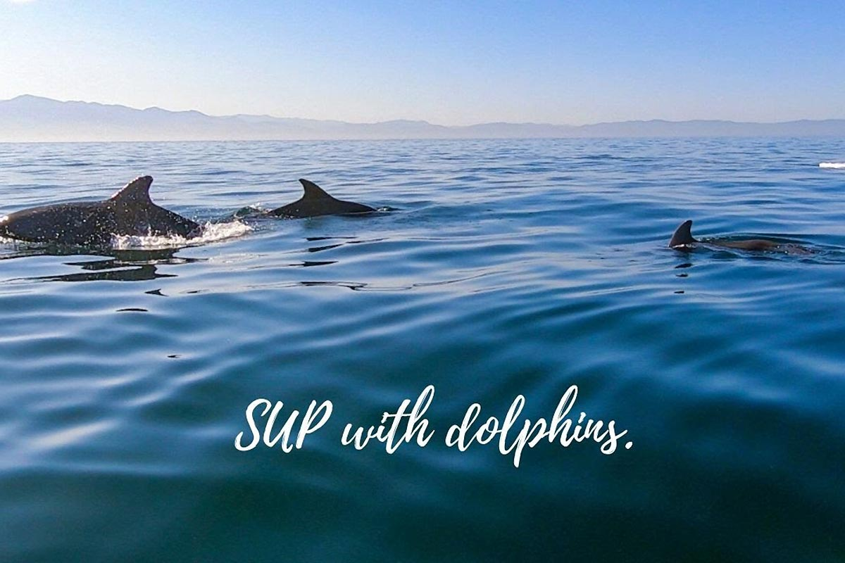 Une session avec des dauphins