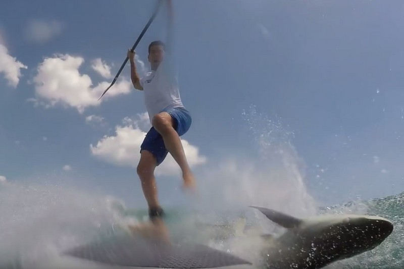 SUP surfer vs requin !