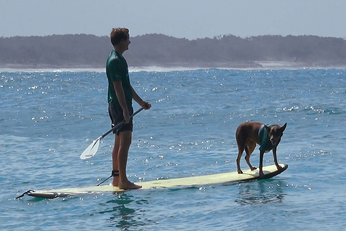 Les chiens en action sur le Noosa Festival of Surfing