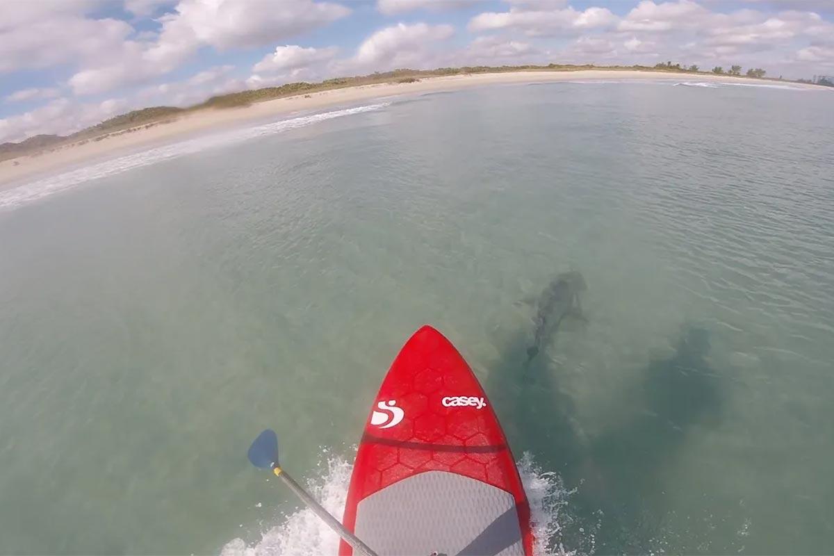 Une session avec des requins en Floride