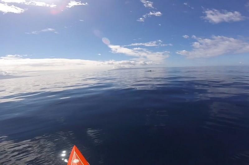 Suzie Cooney et les baleines