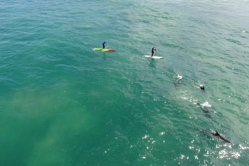 Des dauphins, des SUP surfers et un drone