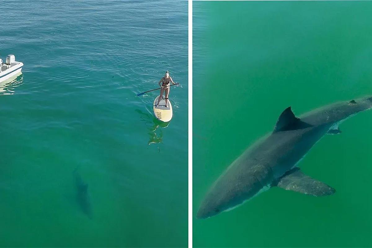 Une rencontre étonnante… avec un requin !